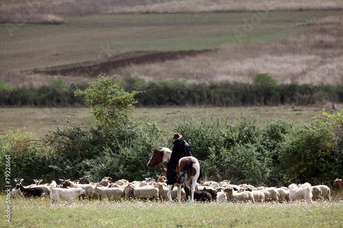 Foto op Aluminium Schapen pastore e pecore