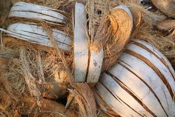 Dried coconut husk.