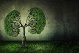 green tree shaped like human lungs. Climate global warming