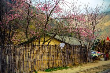 Beauty spring in Ha Giang, Vietnam.