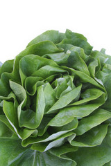 lattuga_ verdura su sfondo bianco
