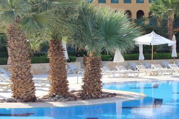 Три пальмы у бассейна