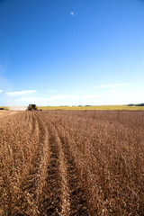 Harvester making harvesting soybean field - Mato Grosso State -