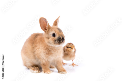 Staande foto Kip Easter bunny and Easter Chicken on white background Easter card