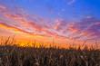 Leinwandbild Motiv Vibrant Harvest
