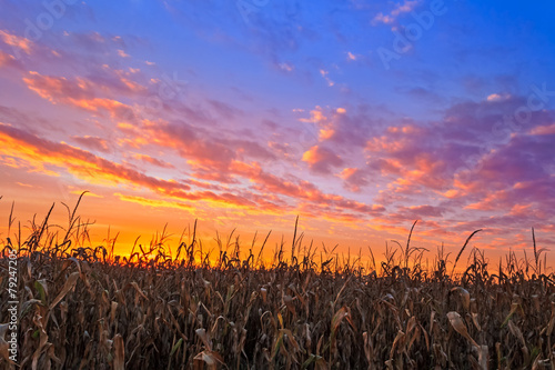 Vibrant Harvest - 79247205