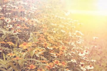 Art high light; daisy field flowers Natural background, retro fi