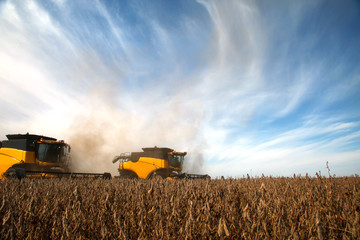 Soybean harvest in sunny day.
