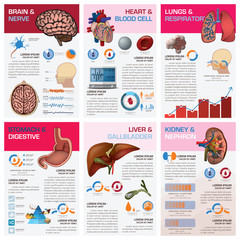 Internal Human Organ Health And Medical Chart Diagram Infographi
