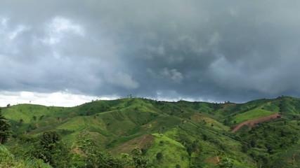 Green corn field in Loei province, Thailand