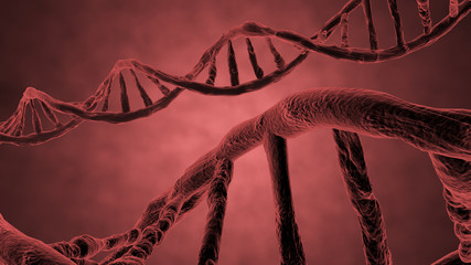 red helix of DNA