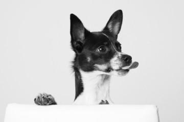 frecher Hund
