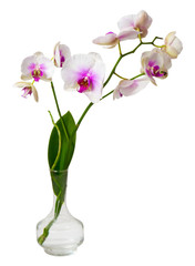 Beautiful twig orchid in a glass vase