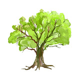 Fototapety Tree vector illustration  hand drawn  painted watercolor