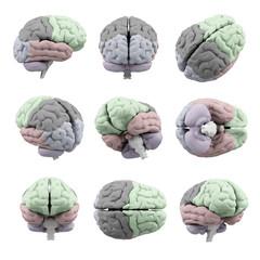 Brains set