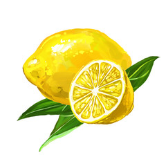 fruit lemon Vector illustration  hand drawn  painted