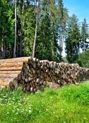 Holzernte Baumstämme gestapelt im Pfälzer Wald