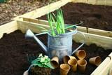 plantation dans carré de terreau,jonquille et primevère