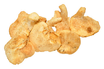Wild Edible Mushrooms