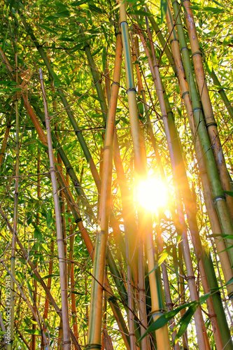 In de dag Bamboo Abendsonne im Bambuswald