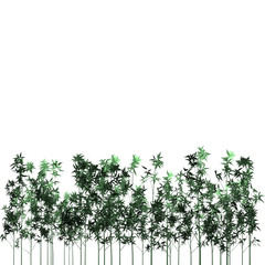 bamboo plants and white copyspace on top