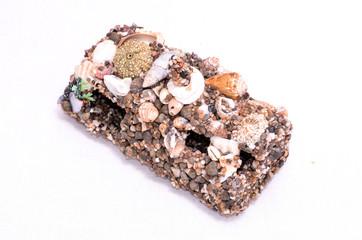 Seashell Decorations