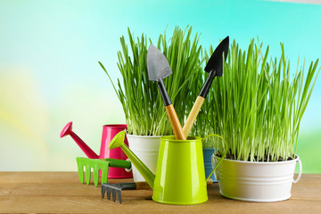 Fresh green grass in small metal buckets, watering can and