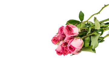 Light pink rose isolated on white background