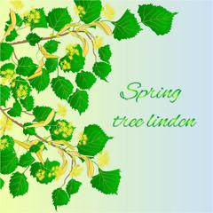Spring tree linden vector