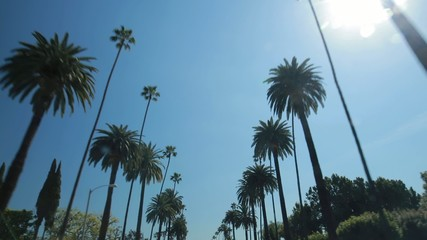 Palm trees driving front window POV