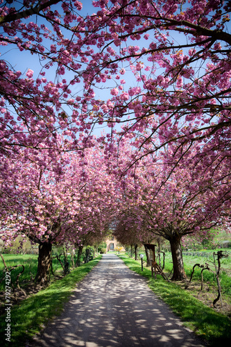 Beautiful Farmhouse in Tuscany during spring - 79274292