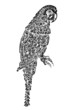 Decorated parrot bird ornament pattern