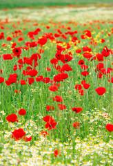spring wild flowers field landscape