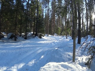 Cross country skiing man in forest