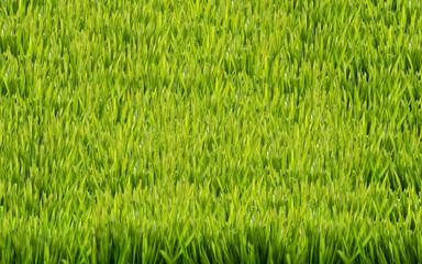 grüner Rasen Wiese