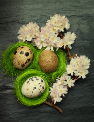 Three small quail eggs in side tiny green nests with pink spring