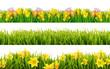 Freisteller Frühling und Sommerblumen Wiese