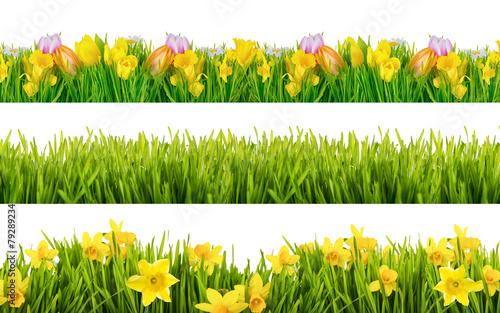 Poster Tulp Freisteller Frühling und Sommerblumen Wiese