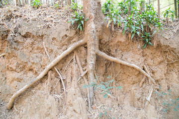 Root wood dry in national park