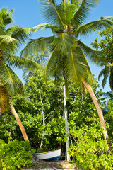 High palms on a tropical beach at Mahe island Seychelles
