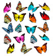 Big collection of colorful butterflies. Vector - 79299896