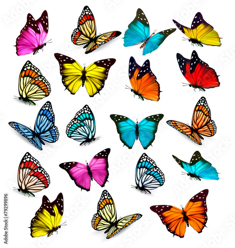 Big collection of colorful butterflies. Vector poster