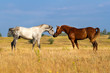 Horses attracted to each other