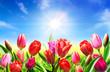 Leinwanddruck Bild - blooming in springtime