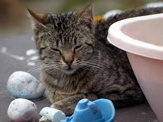 Katze auf dem Bauernhof, getigert, entspannt