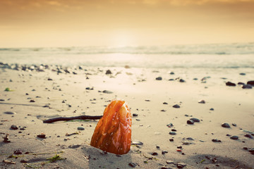 Amber stone on the beach. Precious gem, treasure. Baltic Sea