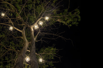 Lanterns hanging from tree