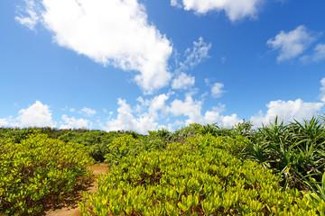 久高島の綺麗な自然