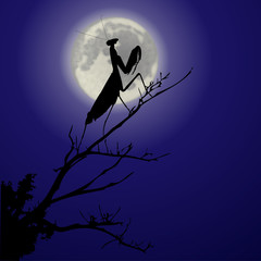 Silhouette einer Gottesanbeterin bei Vollmond