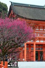 下鴨神社の光琳梅
